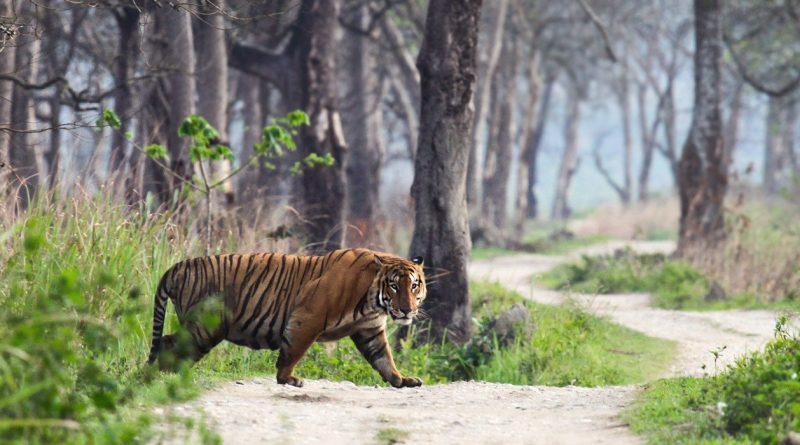 road trips from jaipur to ranthambore