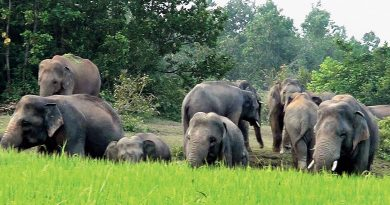 Mahanadi Elephant Reserve