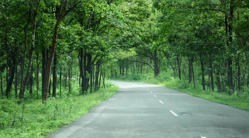 Bangalore to Bandipur Forest