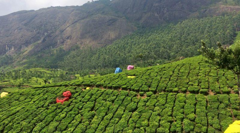 Darjeeling to Pelling