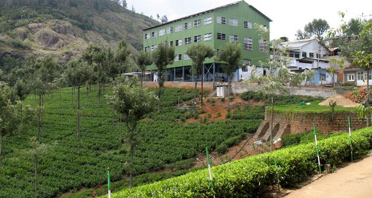 Highfield tea Factory
