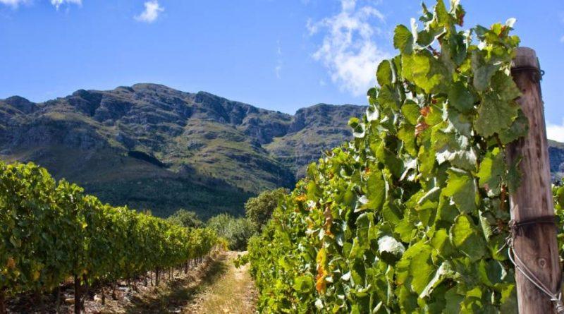 Tiger Hills Vineyards Resort and Spa